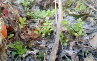 orto naturale: prime piantine