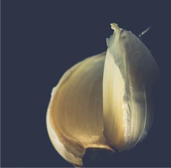 Come seminare l 39 aglio distanze profondit fase lunare for Seminare aglio
