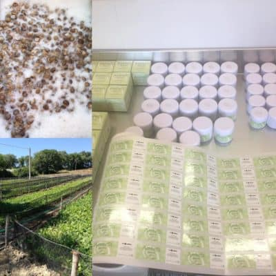 La bava di lumaca: proprietà e utilizzo
