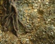 suolo con microrganismi