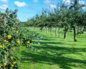 forme di allevamento del frutteto