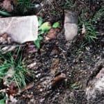 Coltivare l'orto biodinamico senza veleni