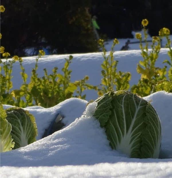 neve nell'orto