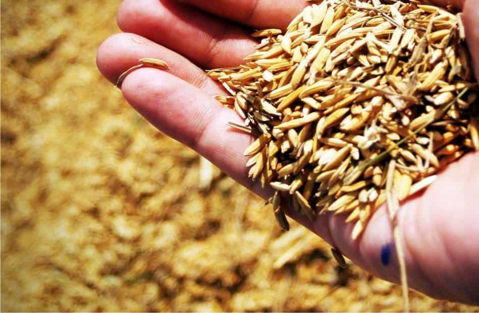 Come fare l 39 orto biologico orto da coltivare for Semina a spaglio