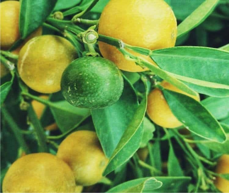 Raccolto di gennaio: frutta e verdura di stagione