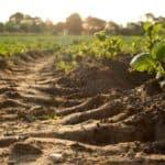 Coltivazione biologica: come e perché effettuarla