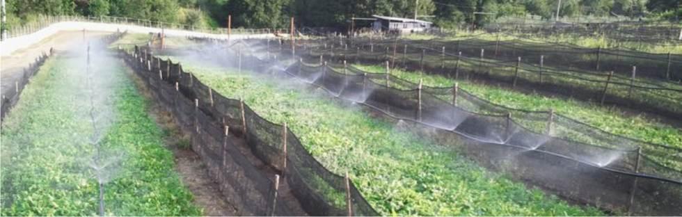 impianto irrigazione per elicicoltura