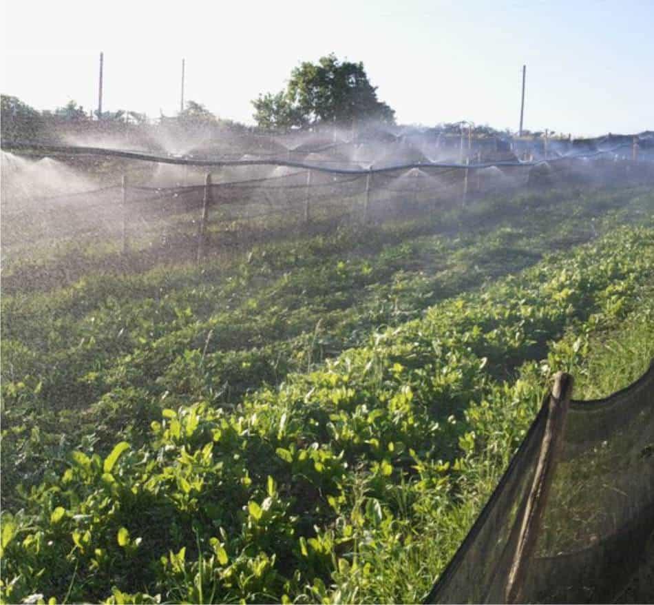 L'irrigazione delle chiocciole