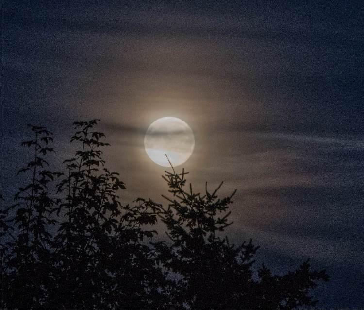 La luna in agricoltura: influsso e coltivazione