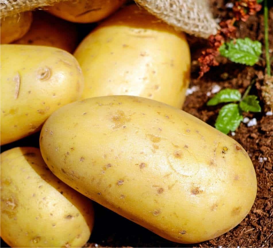 Coltivazione biologica della patata