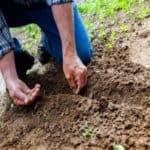 Fare l'orto da zero: come iniziare