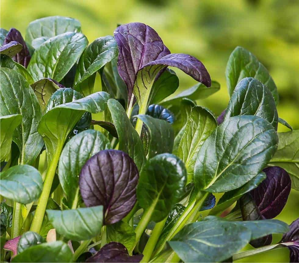 Il raccolto di marzo: ortaggi e frutta di stagione