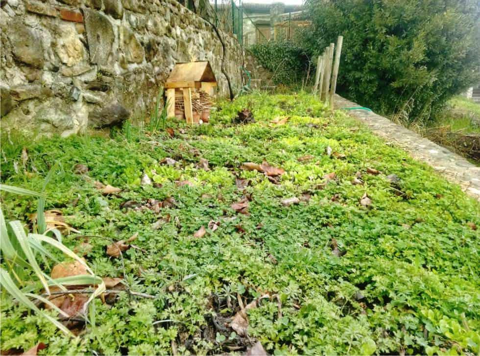 erbe spontanee nell'orto naturale