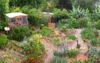 realizzare una food forest