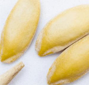semini di melone