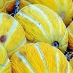 Il melone giallo invernale