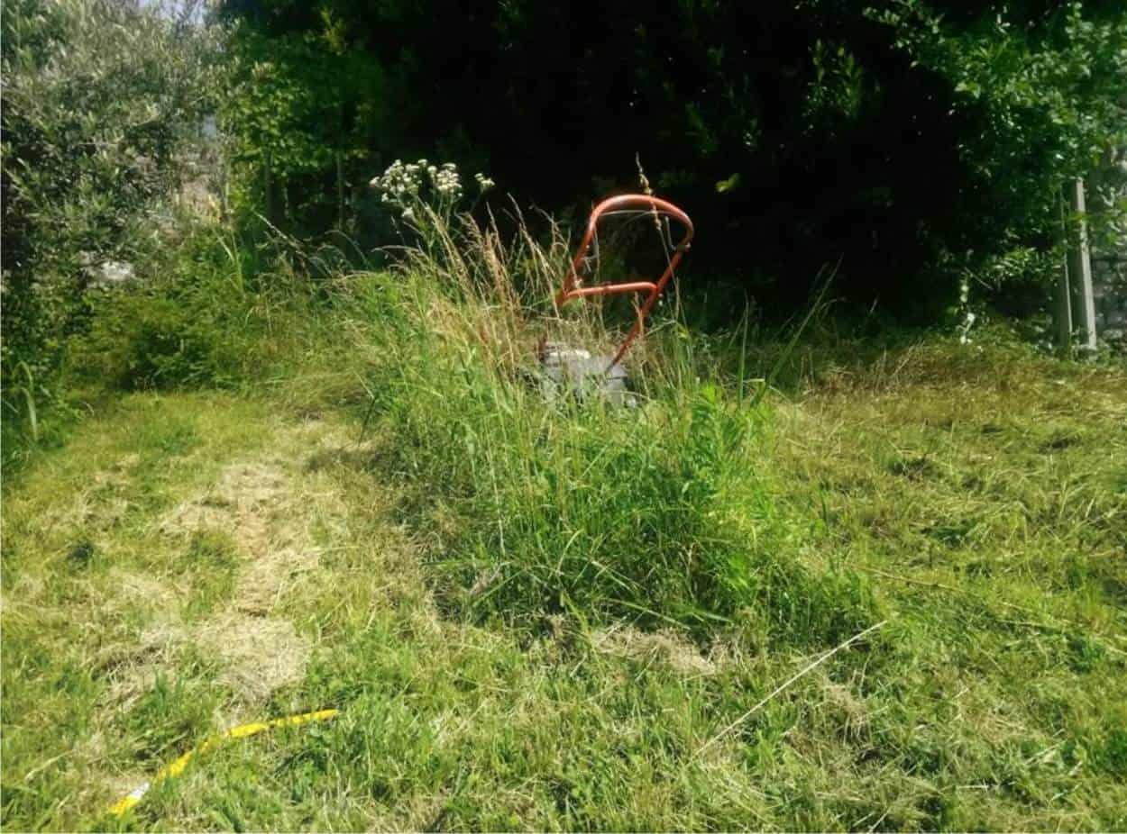 prima l'erba alta