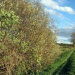La siepe naturale, utilissima per le coltivazioni