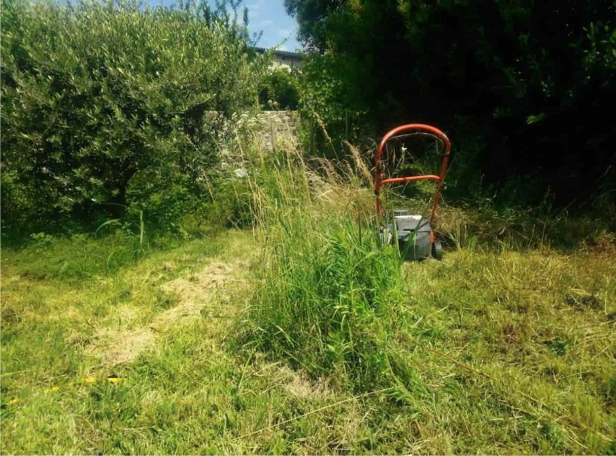 lasciamo l'erba che cresca