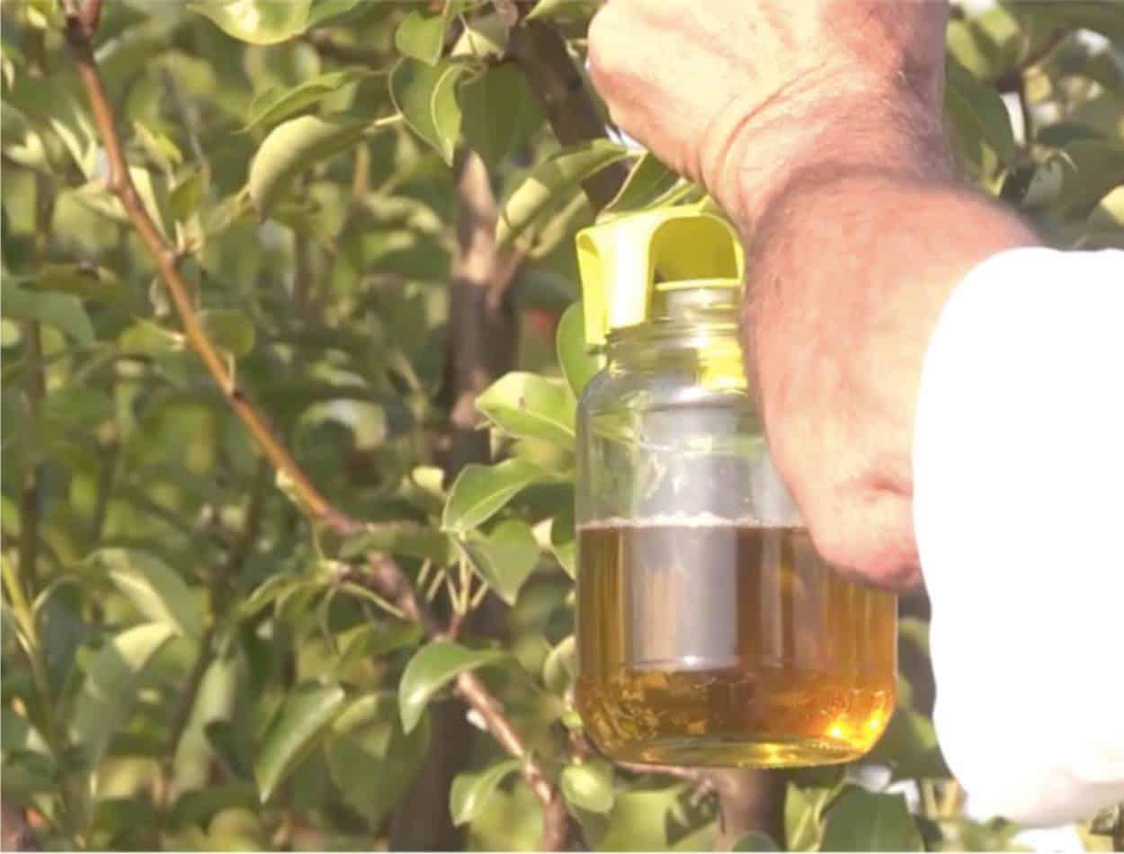 Le trappole per il monitoraggio nel frutteto biologico