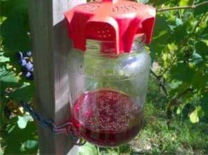 trappola vaso rossa per la dr