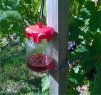 vaso trap per la cattura della drosophila suzukii