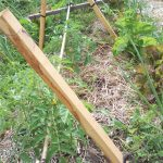 Costruire tutori permanenti per le piante dell'orto sinergico