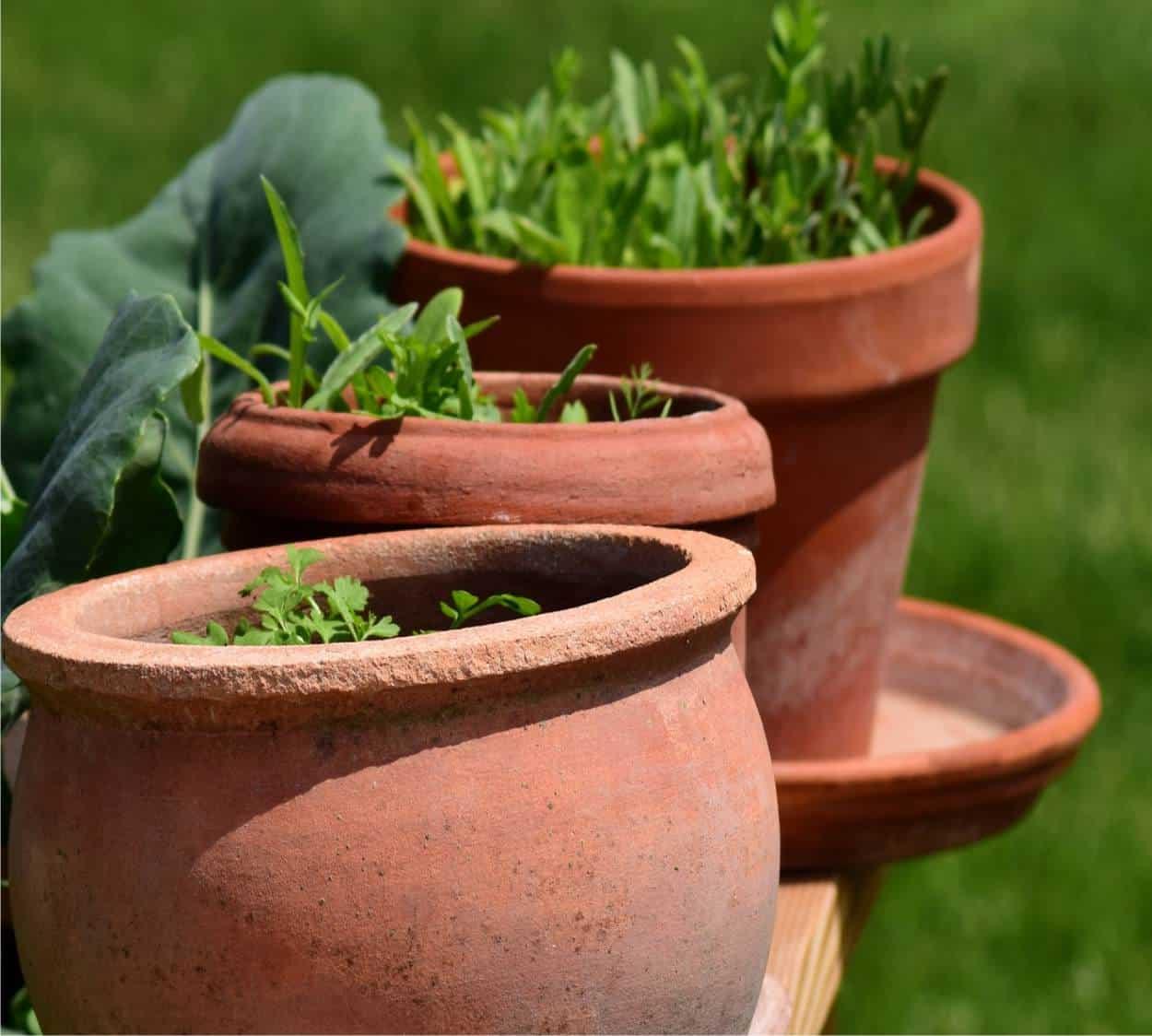 La scelta del terriccio per i vasi orto da coltivare for Vasi per semina