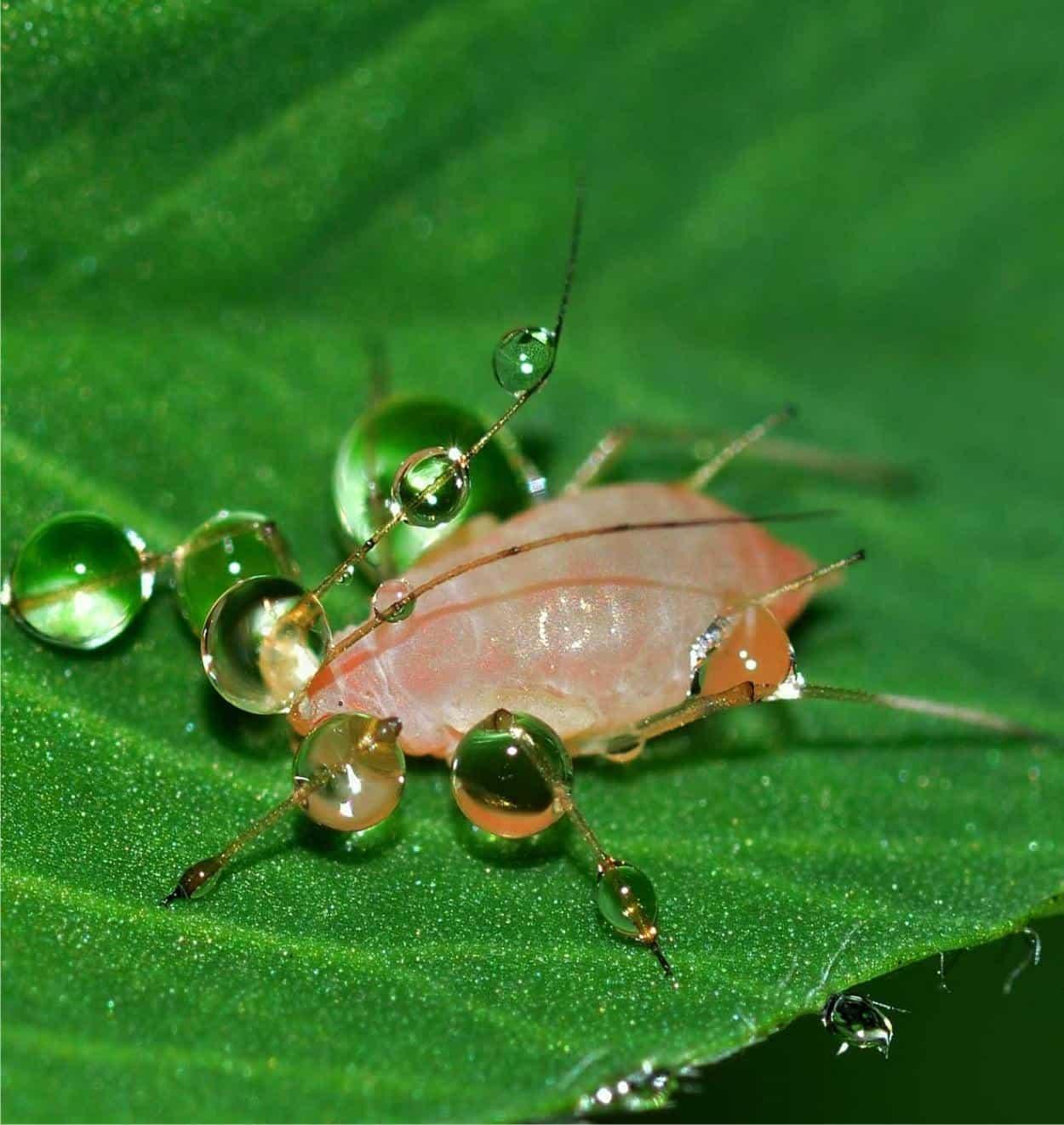 Lo spinosad: insetticida biologico