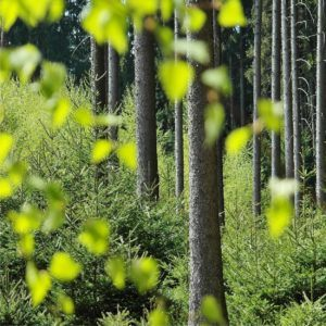 un bosco