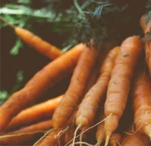 carote raccolte sane