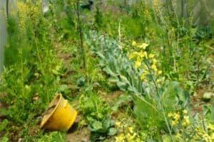 coltivazioni naturali