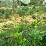 Coltivare senza arare: dai nativi d'America alla permacultura