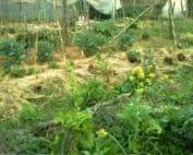 permacultura paesaggio