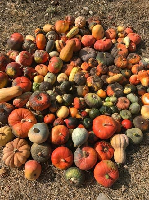 varietà di zucche