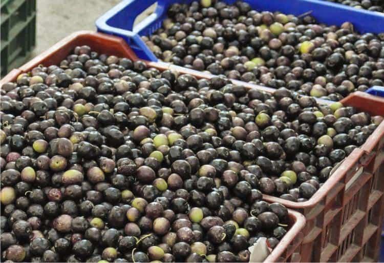 casse di olive