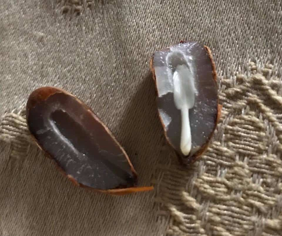 I semi dei kaki, le posate e l'inverno