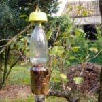 Trappole alimentari per non usare pesticidi