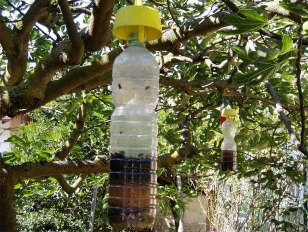 trappole per la mosca della frutta