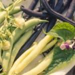 Coltivare i fagiolini in vaso