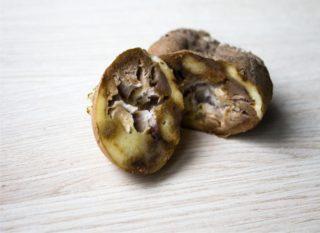 marciume secco della patata