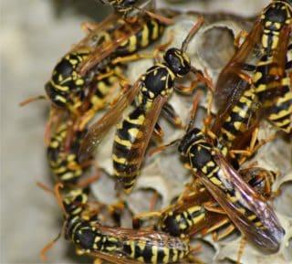 vespe e prevenzione