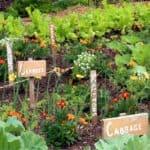 Un orto resiliente con la biodiversità