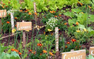 orto resiliente e biodiversità
