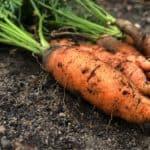 Famiglie di ortaggi: l'albero genealogico dell'orto