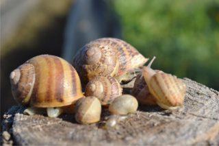 il letargo delle lumache