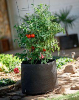 vaso in tessuto con pomodori