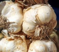 teste d'aglio