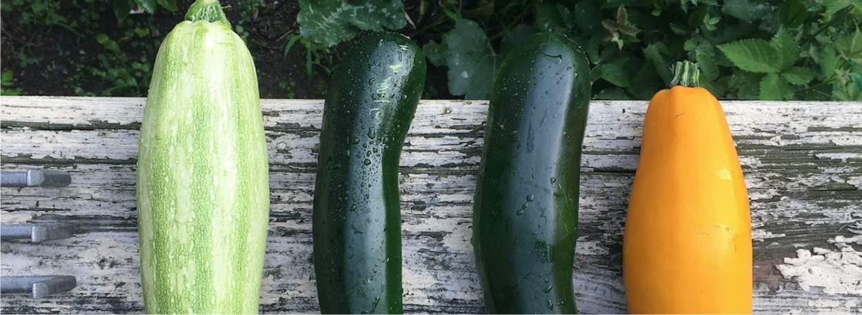 varietà di zucchina