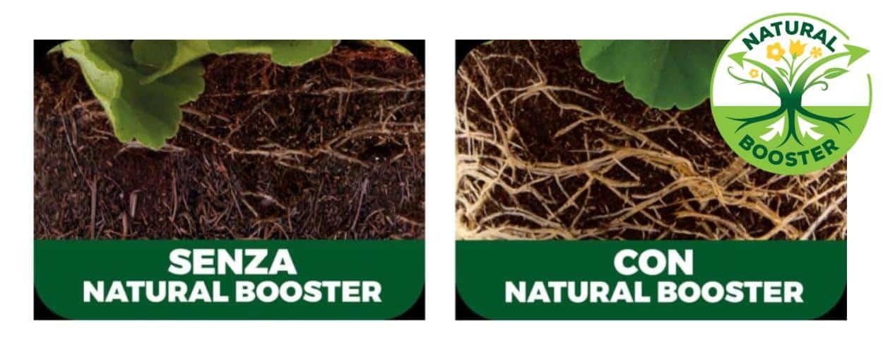 le radici protette con natural booster